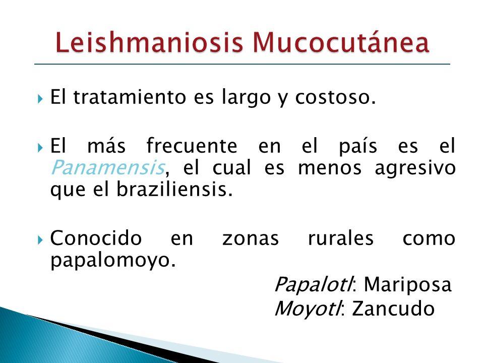 El tratamiento es largo y costoso. El más frecuente en el país es el Panamensis, el cual es menos agresivo que el braziliensis. Conocido en zonas rura