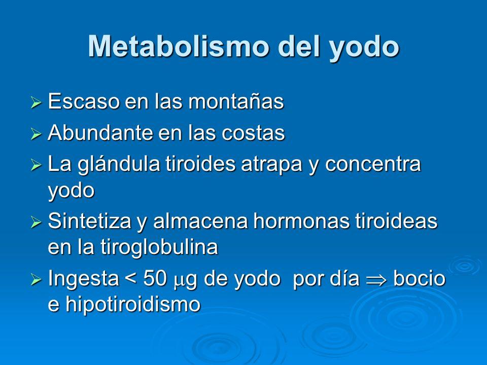 Metabolismo del yodo Escaso en las montañas Escaso en las montañas Abundante en las costas Abundante en las costas La glándula tiroides atrapa y conce