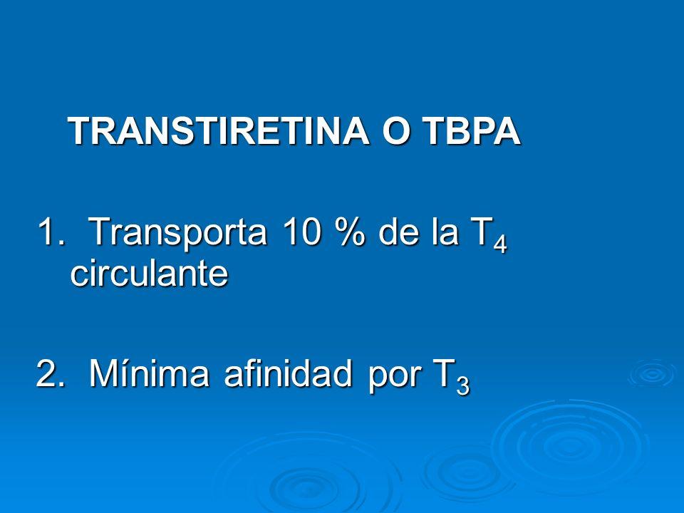 TRANSTIRETINA O TBPA 1. Transporta 10 % de la T 4 circulante 2. Mínima afinidad por T 3