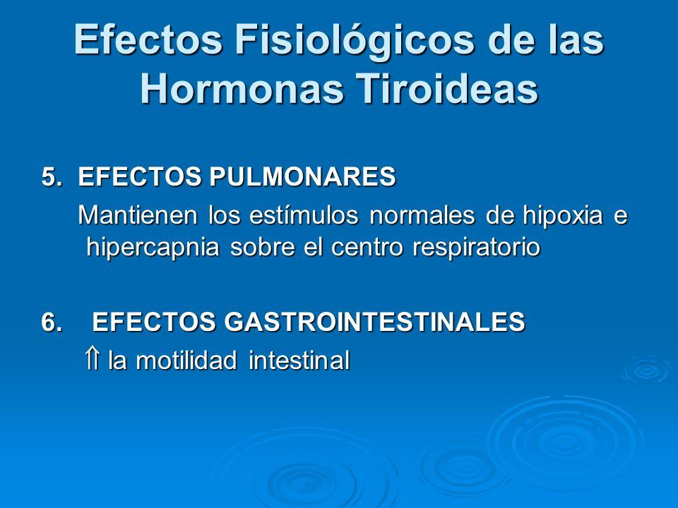 Efectos Fisiológicos de las Hormonas Tiroideas 5. EFECTOS PULMONARES Mantienen los estímulos normales de hipoxia e hipercapnia sobre el centro respira