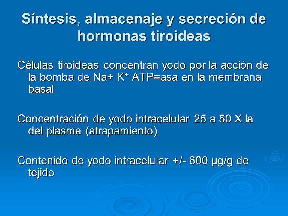 Síntesis, almacenaje y secreción de hormonas tiroideas Células tiroideas concentran yodo por la acción de la bomba de Na+ K + ATP=asa en la membrana b