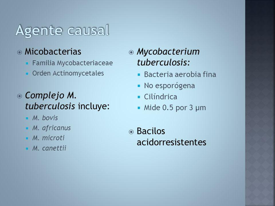 Micobacterias Familia Mycobacteriaceae Orden Actinomycetales Complejo M. tuberculosis incluye: M. bovis M. africanus M. microti M. canettii Mycobacter