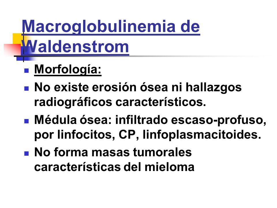 Macroglobulinemia de Waldenstrom Morfología: No existe erosión ósea ni hallazgos radiográficos característicos. Médula ósea: infiltrado escaso-profuso