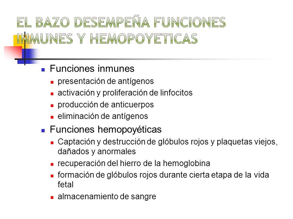 Funciones inmunes presentación de antígenos activación y proliferación de linfocitos producción de anticuerpos eliminación de antígenos Funciones hemo