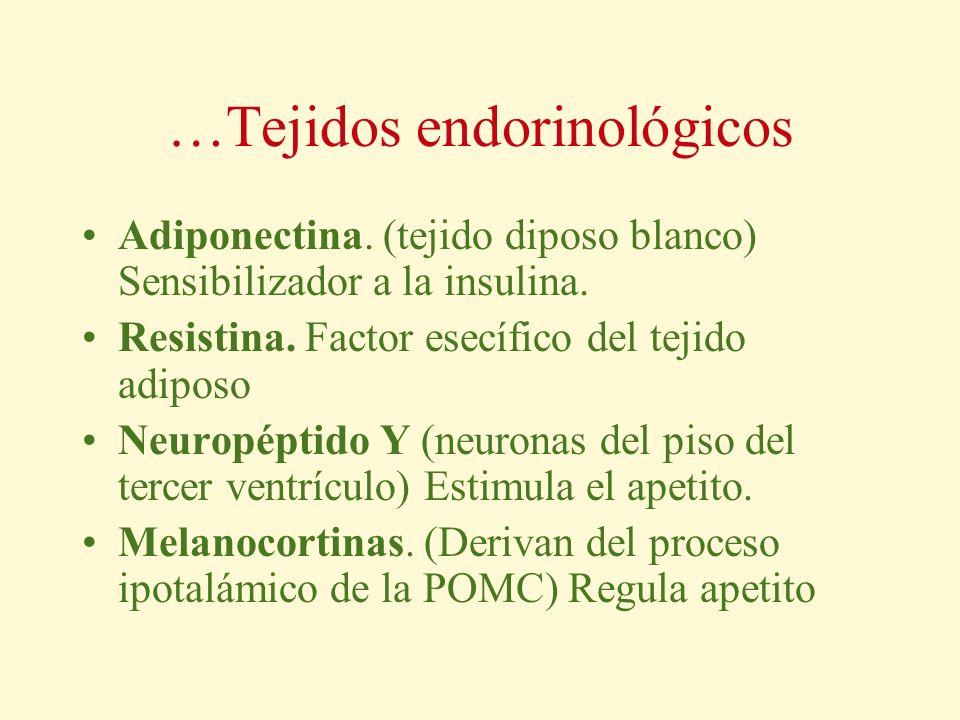 …Tejidos endorinológicos Adiponectina. (tejido diposo blanco) Sensibilizador a la insulina. Resistina. Factor esecífico del tejido adiposo Neuropéptid
