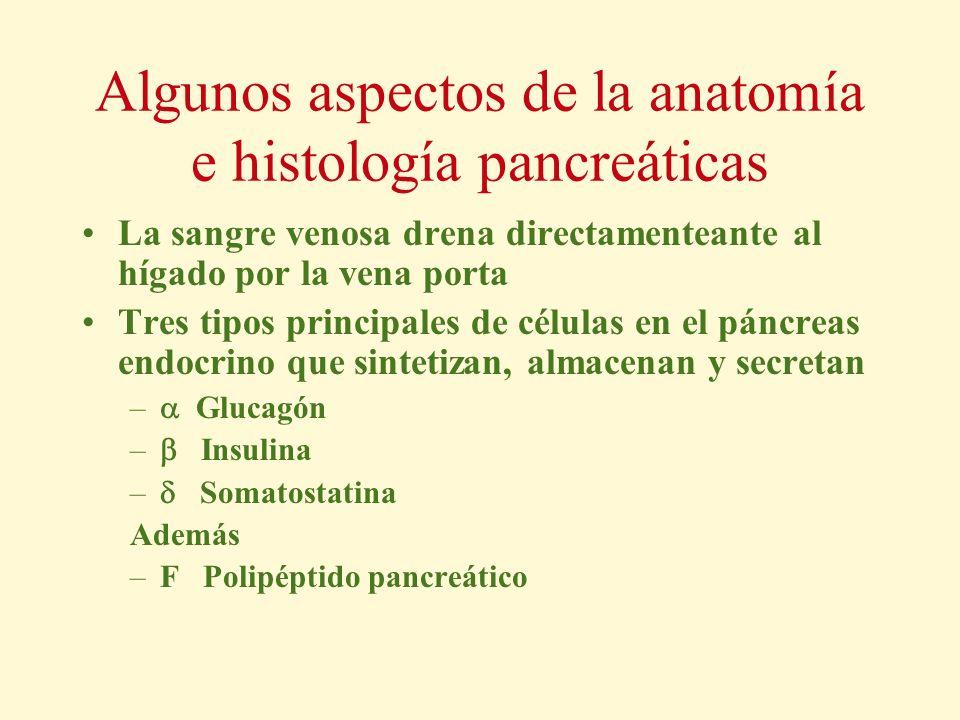 Algunos aspectos de la anatomía e histología pancreáticas La sangre venosa drena directamenteante al hígado por la vena porta Tres tipos principales d