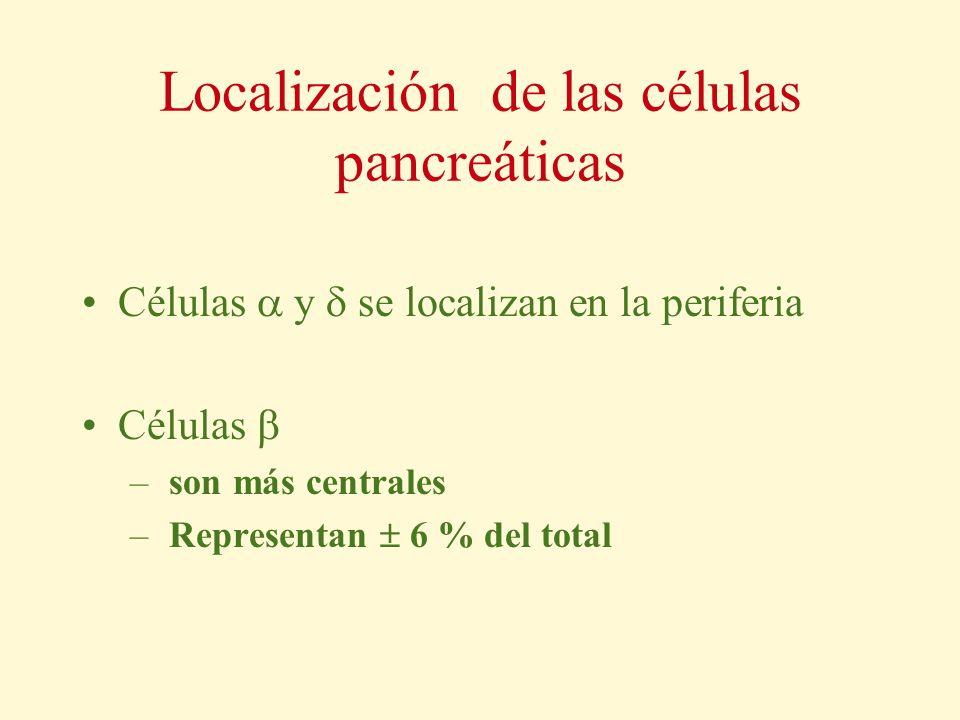 Localización de las células pancreáticas Células y se localizan en la periferia Células – son más centrales – Representan 6 % del total