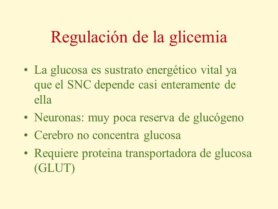Regulación de la glicemia La glucosa es sustrato energético vital ya que el SNC depende casi enteramente de ella Neuronas: muy poca reserva de glucóge