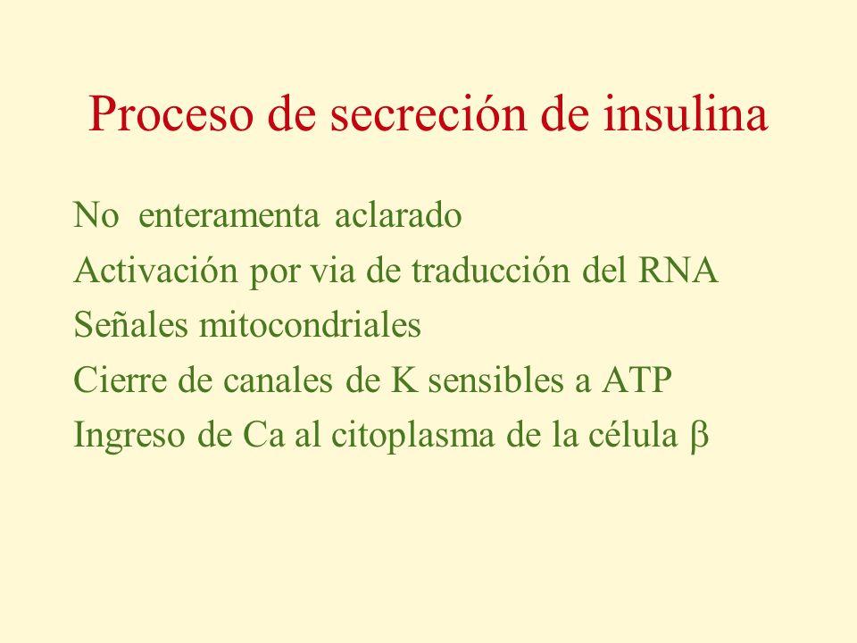 Proceso de secreción de insulina No enteramenta aclarado Activación por via de traducción del RNA Señales mitocondriales Cierre de canales de K sensib