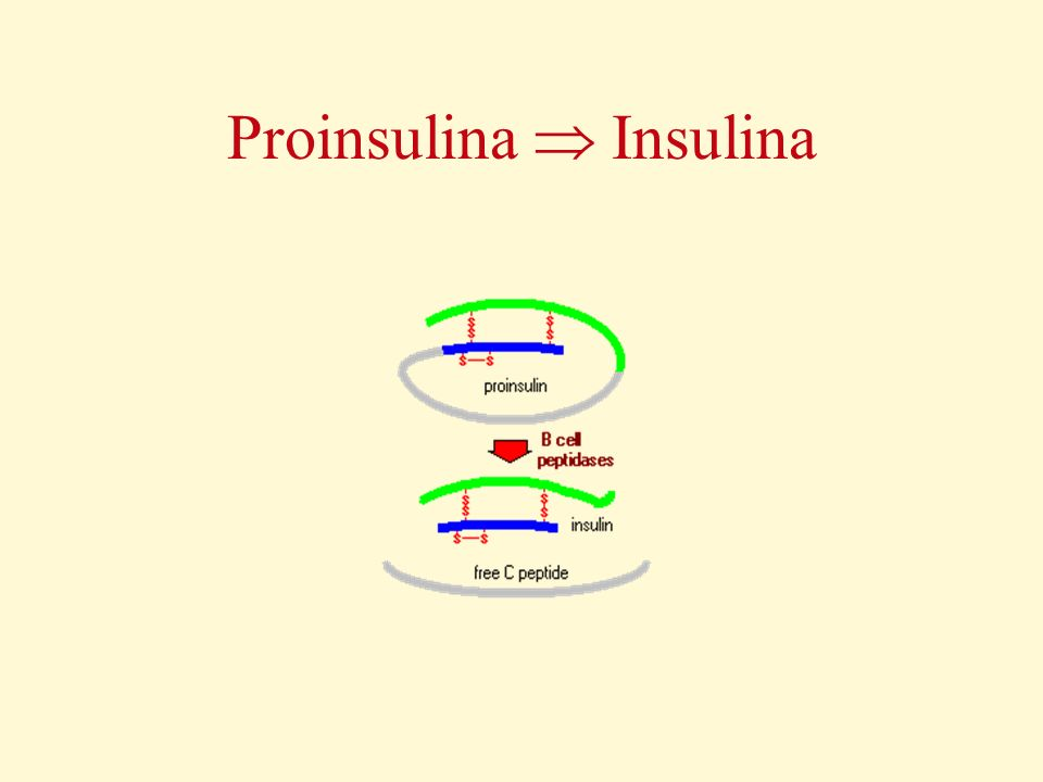 Proinsulina Insulina