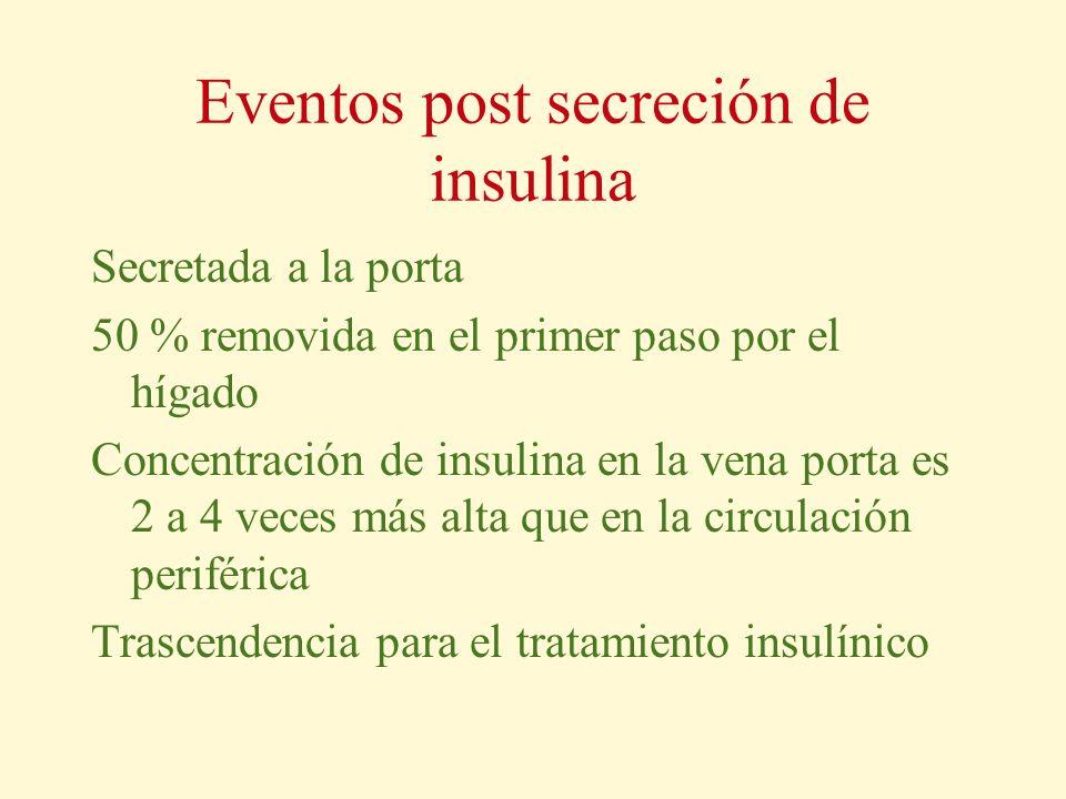 Eventos post secreción de insulina Secretada a la porta 50 % removida en el primer paso por el hígado Concentración de insulina en la vena porta es 2
