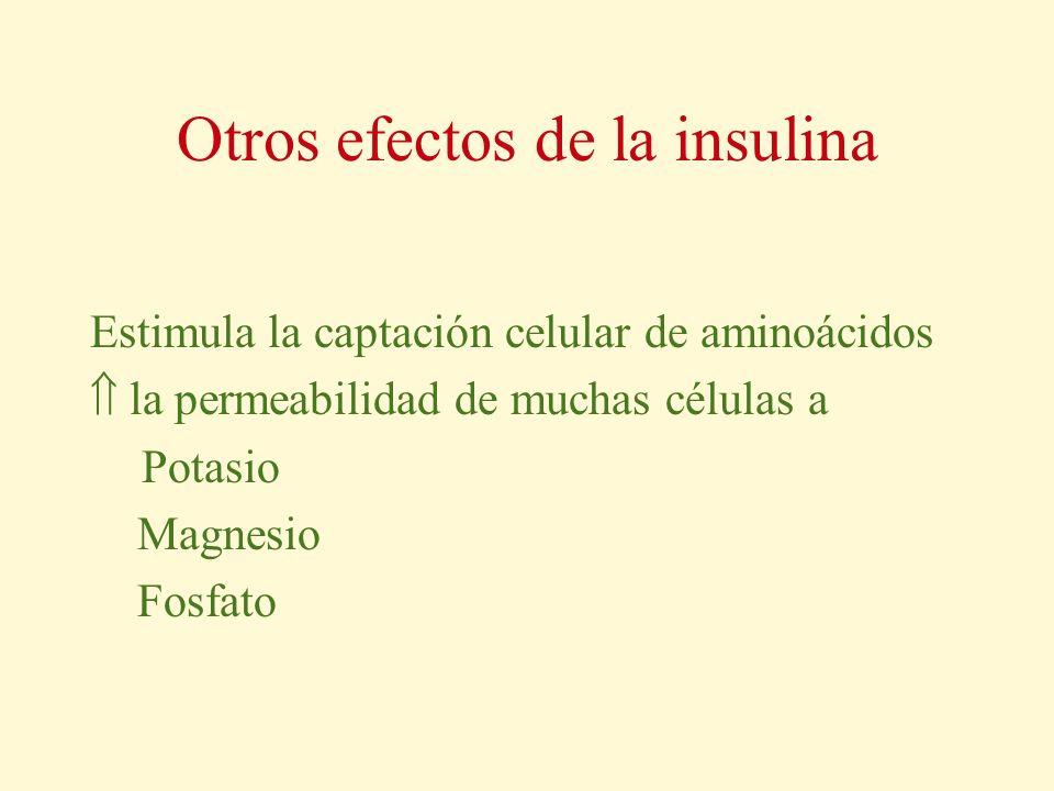 Otros efectos de la insulina Estimula la captación celular de aminoácidos la permeabilidad de muchas células a Potasio Magnesio Fosfato