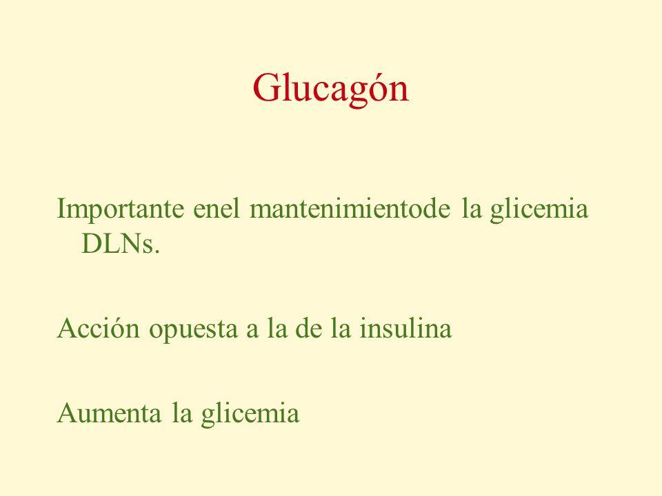 Glucagón Importante enel mantenimientode la glicemia DLNs. Acción opuesta a la de la insulina Aumenta la glicemia