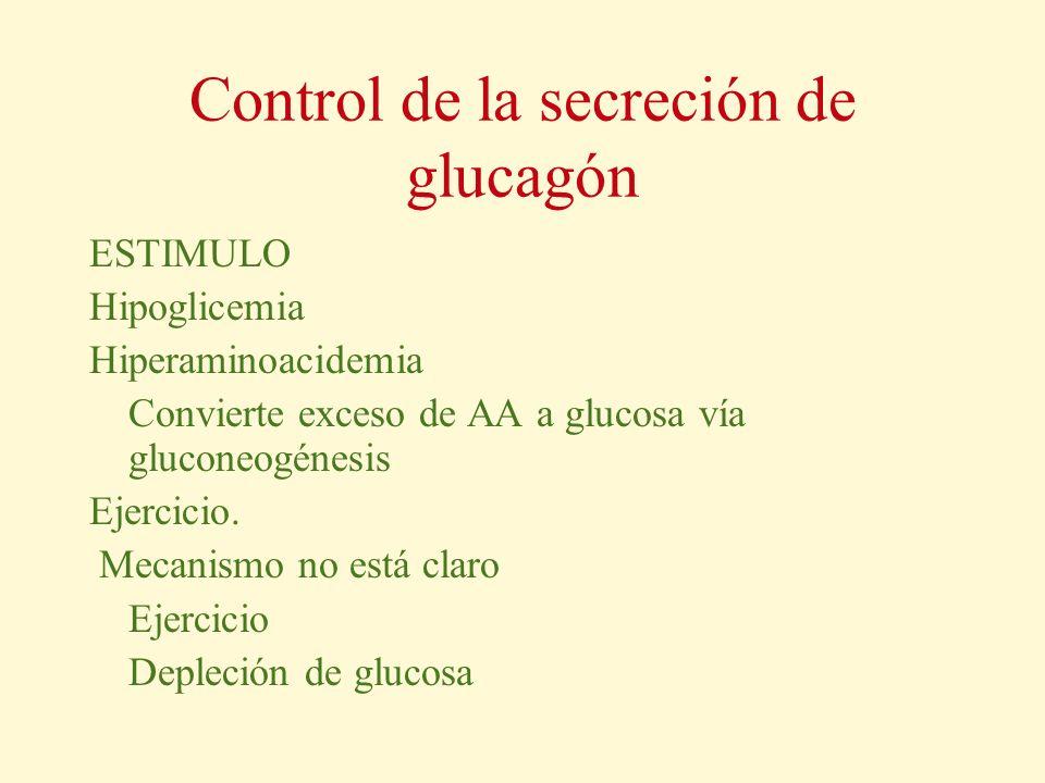 Control de la secreción de glucagón ESTIMULO Hipoglicemia Hiperaminoacidemia Convierte exceso de AA a glucosa vía gluconeogénesis Ejercicio. Mecanismo