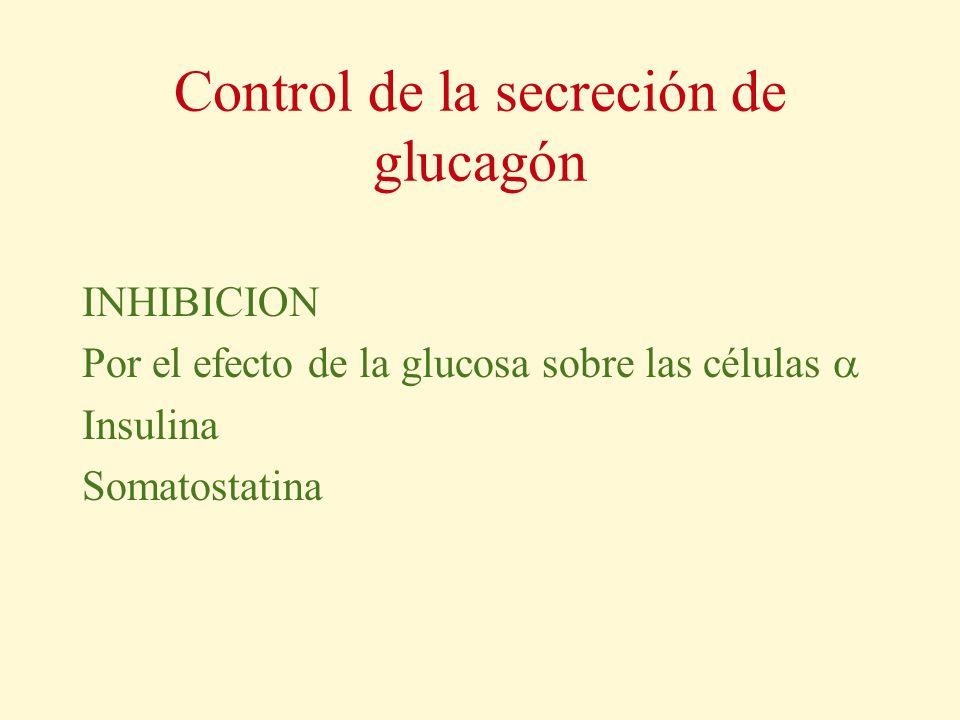 Control de la secreción de glucagón INHIBICION Por el efecto de la glucosa sobre las células Insulina Somatostatina