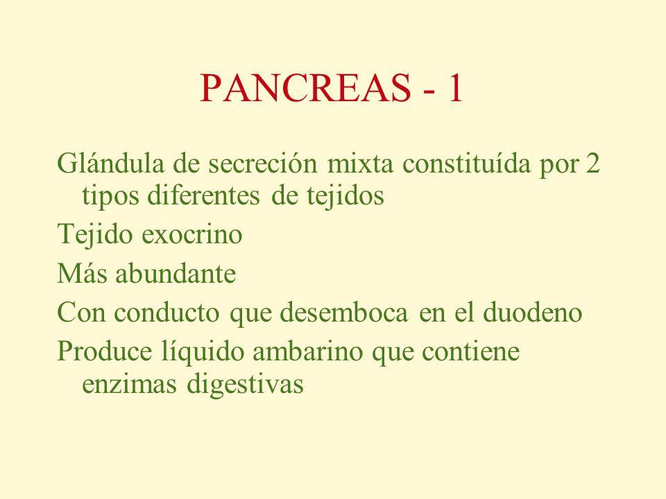 PANCREAS - 1 Glándula de secreción mixta constituída por 2 tipos diferentes de tejidos Tejido exocrino Más abundante Con conducto que desemboca en el