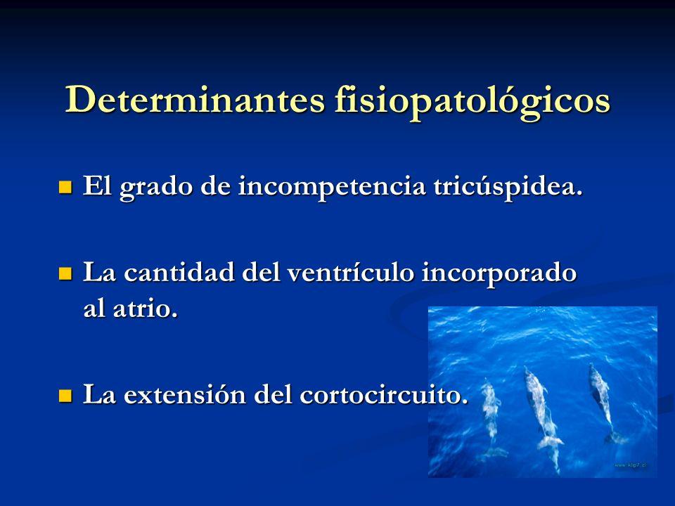 Determinantes fisiopatológicos El grado de incompetencia tricúspidea. El grado de incompetencia tricúspidea. La cantidad del ventrículo incorporado al