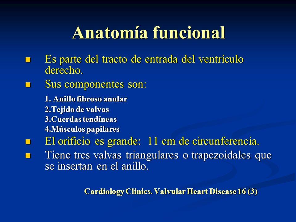 Anatomía funcional Es parte del tracto de entrada del ventrículo derecho. Es parte del tracto de entrada del ventrículo derecho. Sus componentes son: