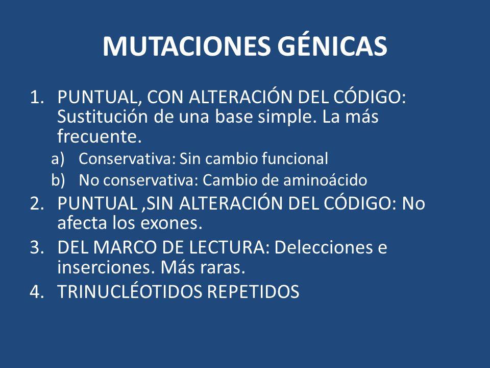 MUTACIONES GÉNICAS 1.PUNTUAL, CON ALTERACIÓN DEL CÓDIGO: Sustitución de una base simple. La más frecuente. a)Conservativa: Sin cambio funcional b)No c