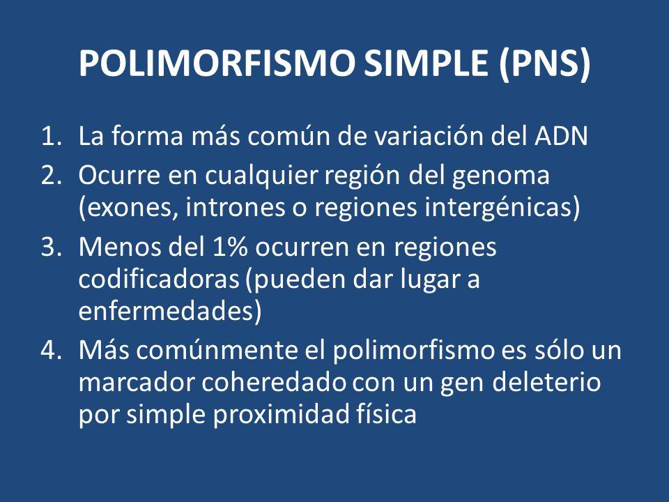 POLIMORFISMO SIMPLE (PNS) 1.La forma más común de variación del ADN 2.Ocurre en cualquier región del genoma (exones, intrones o regiones intergénicas)