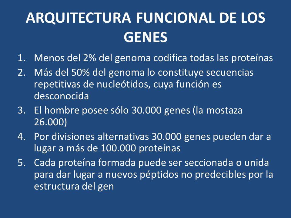 ARQUITECTURA FUNCIONAL DE LOS GENES 1.Menos del 2% del genoma codifica todas las proteínas 2.Más del 50% del genoma lo constituye secuencias repetitiv
