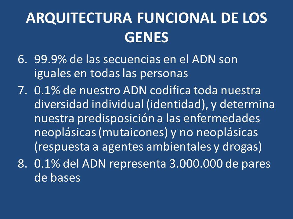 ARQUITECTURA FUNCIONAL DE LOS GENES 6.99.9% de las secuencias en el ADN son iguales en todas las personas 7.0.1% de nuestro ADN codifica toda nuestra