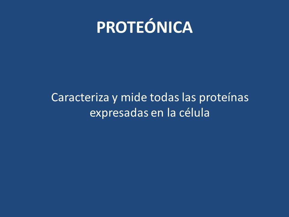 PROTEÓNICA Caracteriza y mide todas las proteínas expresadas en la célula