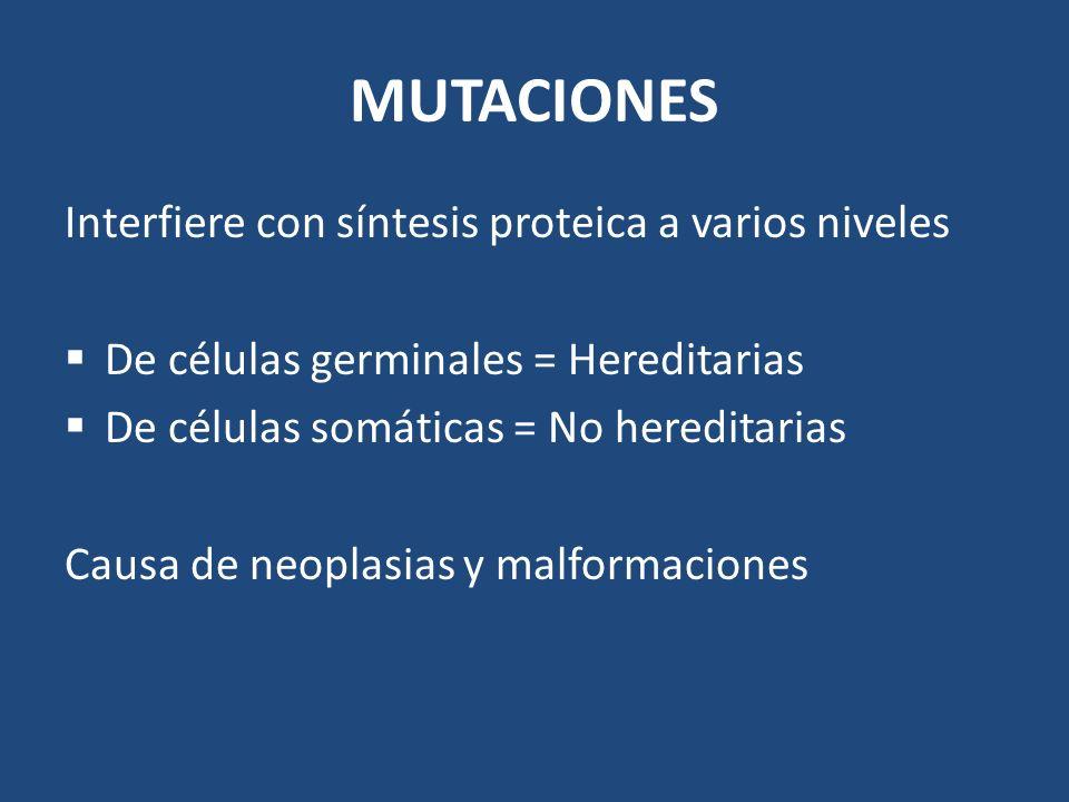 MUTACIONES Interfiere con síntesis proteica a varios niveles De células germinales = Hereditarias De células somáticas = No hereditarias Causa de neop