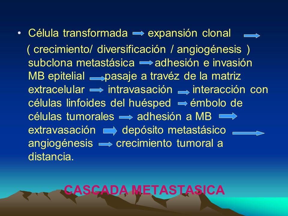 Célula transformada expansión clonal ( crecimiento/ diversificación / angiogénesis ) subclona metastásica adhesión e invasión MB epitelial pasaje a tr