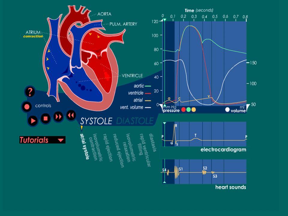 Contracción auricular Completa el llenado ventricular. 15-20% del volumen ventricular. Reflejan los trazos de la onda a de la presión auricular y veno