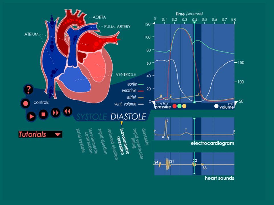 Ciclo Cardíaco Todo el tiempo desde el cierre de las válvulas A-V se han ido llenando las aurículas ya que hay un flujo casi continuo desde las cavas