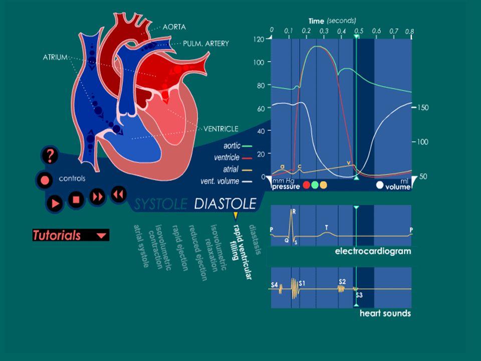 Llenado Ventricular Rápido Inicia cuando la presión ventricular es menor que la auricular y se abren las válvulas a-v. Hay un paso rápido de sangre de