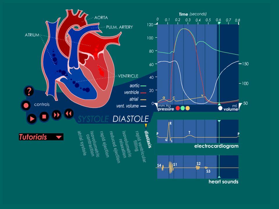 Llenado Ventricular Lento (Diastasis) Se inicia al reducirse el gradiente entre las aurículas y los ventrículos. El paso sanguíneo se hace lento. Es r