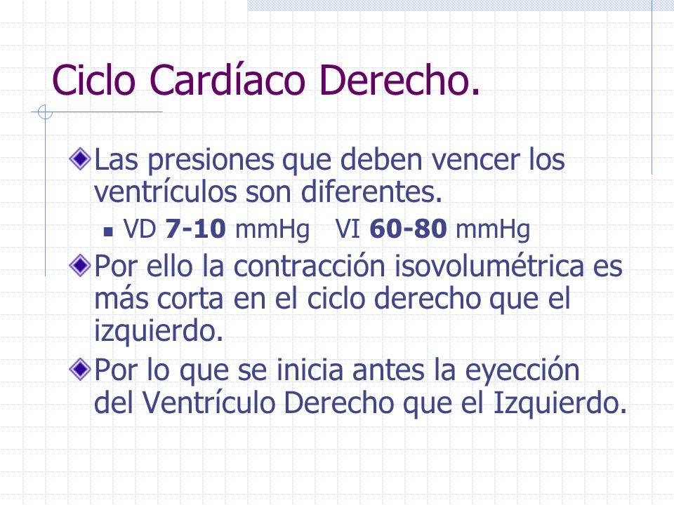 Ciclo Cardíaco Derecho La despolarización del VI ocurre milisegundos antes que el derecho. Por eso la contracción isovolumétrica del Ventrículo Izquie