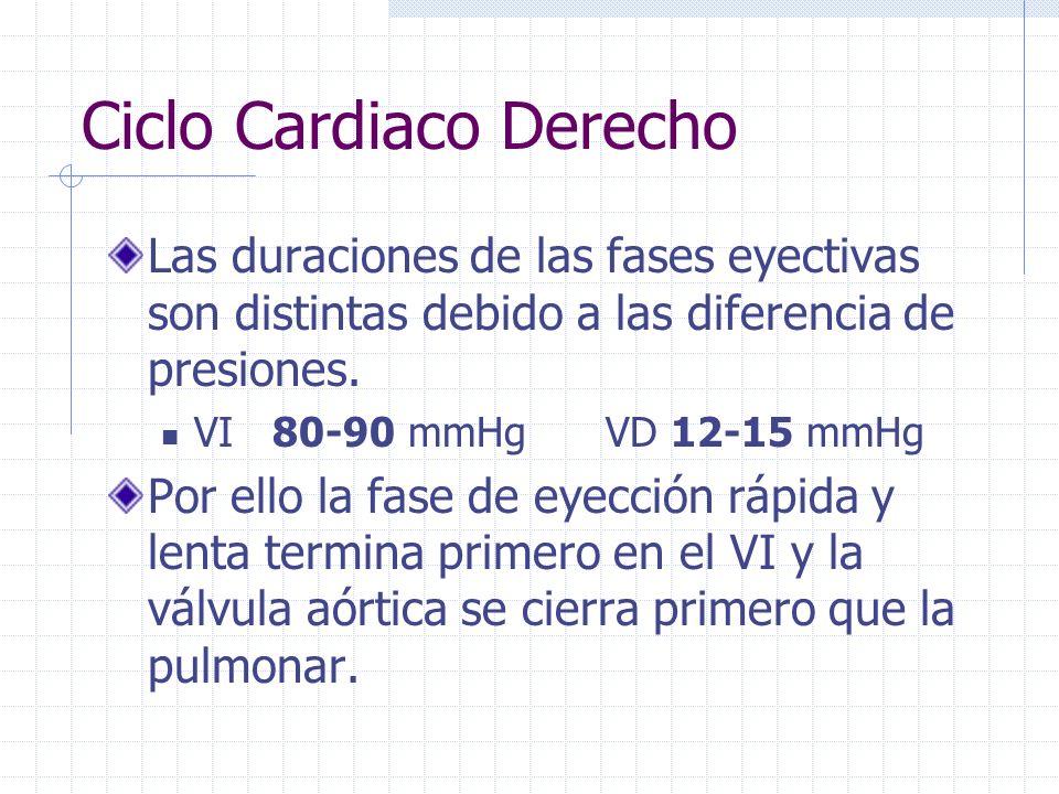 Ciclo Cardíaco Derecho. Las presiones que deben vencer los ventrículos son diferentes. VD 7-10 mmHg VI 60-80 mmHg Por ello la contracción isovolumétri