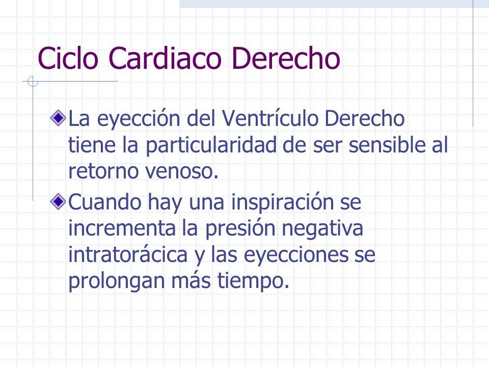 Ciclo Cardiaco Derecho Las duraciones de las fases eyectivas son distintas debido a las diferencia de presiones. VI 80-90 mmHg VD 12-15 mmHg Por ello