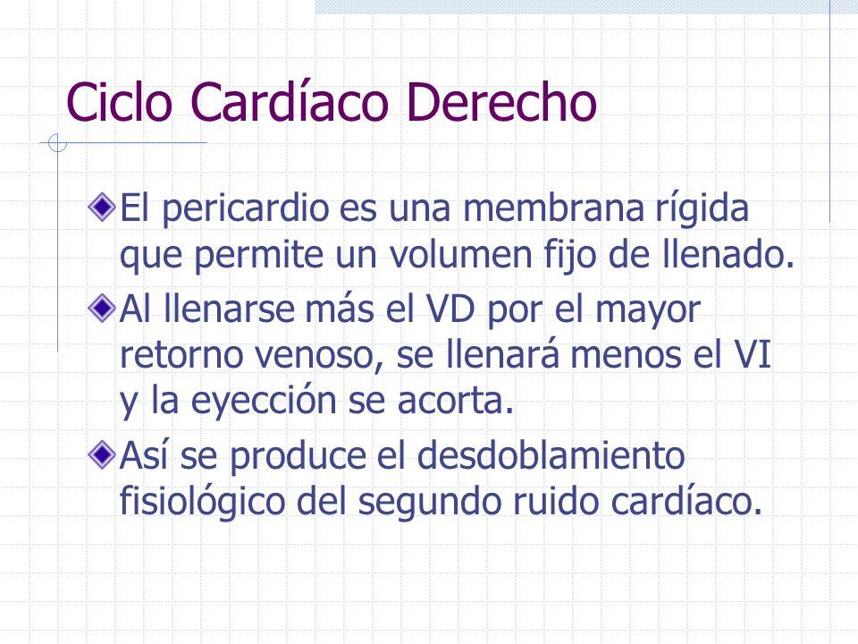 Ciclo Cardiaco Derecho La eyección del Ventrículo Derecho tiene la particularidad de ser sensible al retorno venoso. Cuando hay una inspiración se inc