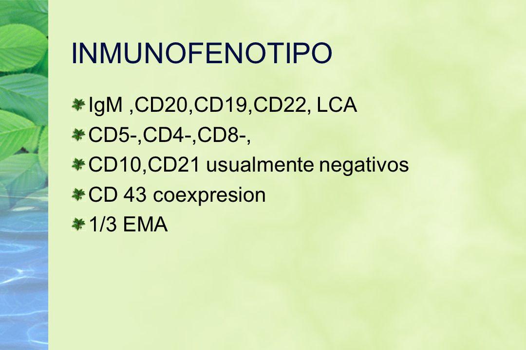 INMUNOFENOTIPO IgM,CD20,CD19,CD22, LCA CD5-,CD4-,CD8-, CD10,CD21 usualmente negativos CD 43 coexpresion 1/3 EMA