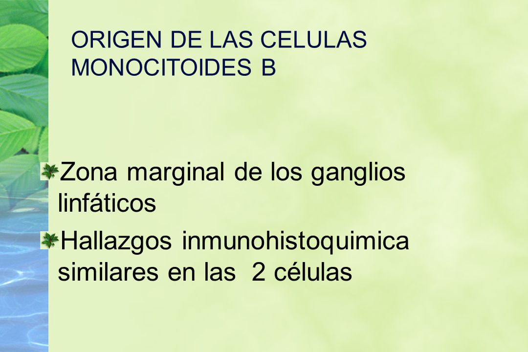 ORIGEN DE LAS CELULAS MONOCITOIDES B Zona marginal de los ganglios linfáticos Hallazgos inmunohistoquimica similares en las 2 células