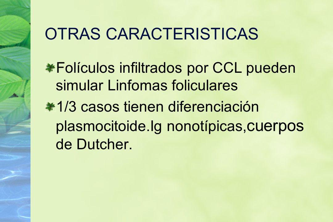 OTRAS CARACTERISTICAS Folículos infiltrados por CCL pueden simular Linfomas foliculares 1/3 casos tienen diferenciación plasmocitoide.Ig nonotípicas,