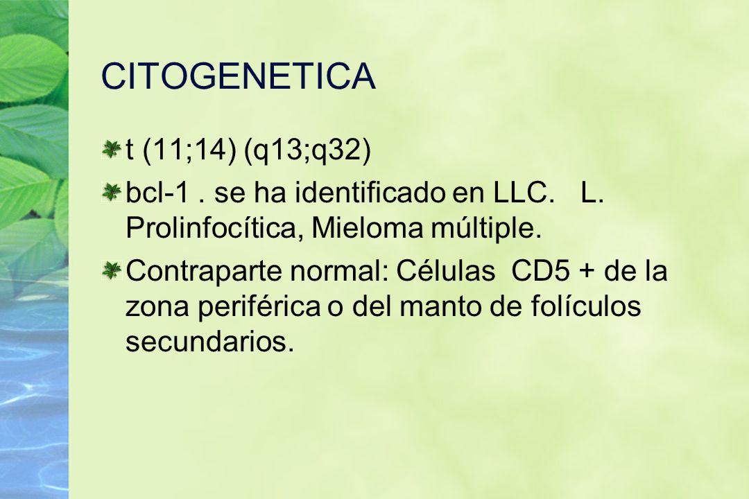 CITOGENETICA t (11;14) (q13;q32) bcl-1. se ha identificado en LLC. L. Prolinfocítica, Mieloma múltiple. Contraparte normal: Células CD5 + de la zona p
