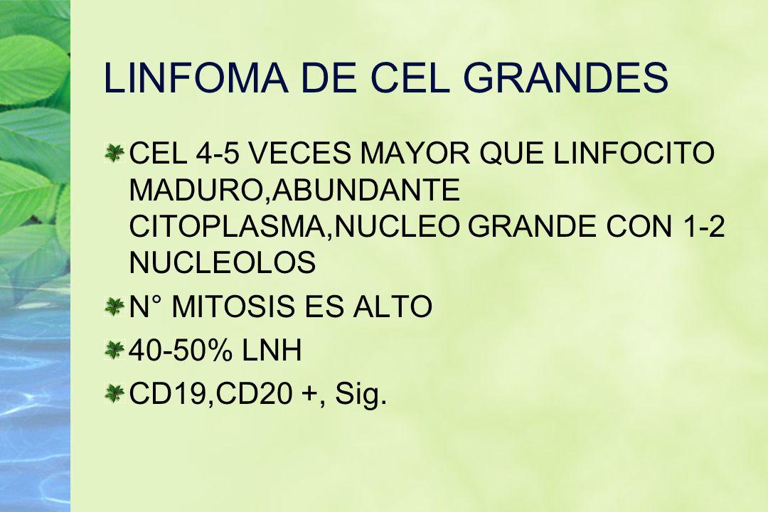 LINFOMA DE CEL GRANDES CEL 4-5 VECES MAYOR QUE LINFOCITO MADURO,ABUNDANTE CITOPLASMA,NUCLEO GRANDE CON 1-2 NUCLEOLOS N° MITOSIS ES ALTO 40-50% LNH CD1