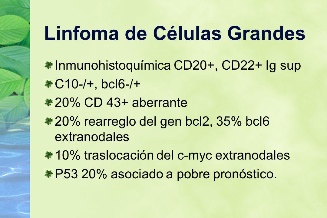 Linfoma de Células Grandes Inmunohistoquímica CD20+, CD22+ Ig sup C10-/+, bcl6-/+ 20% CD 43+ aberrante 20% rearreglo del gen bcl2, 35% bcl6 extranodal