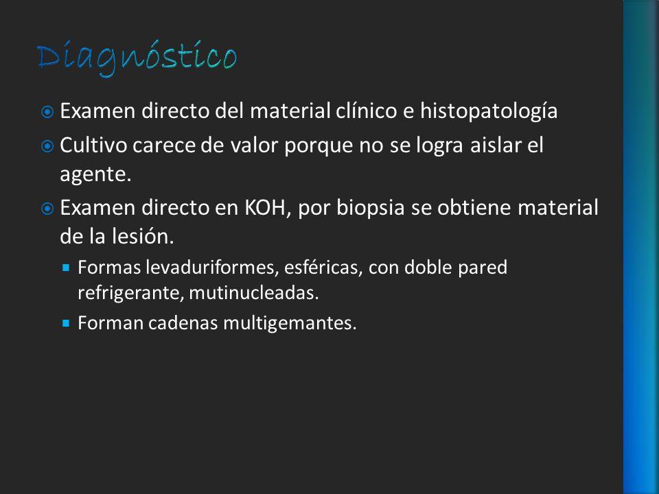 Examen directo del material clínico e histopatología Cultivo carece de valor porque no se logra aislar el agente. Examen directo en KOH, por biopsia s
