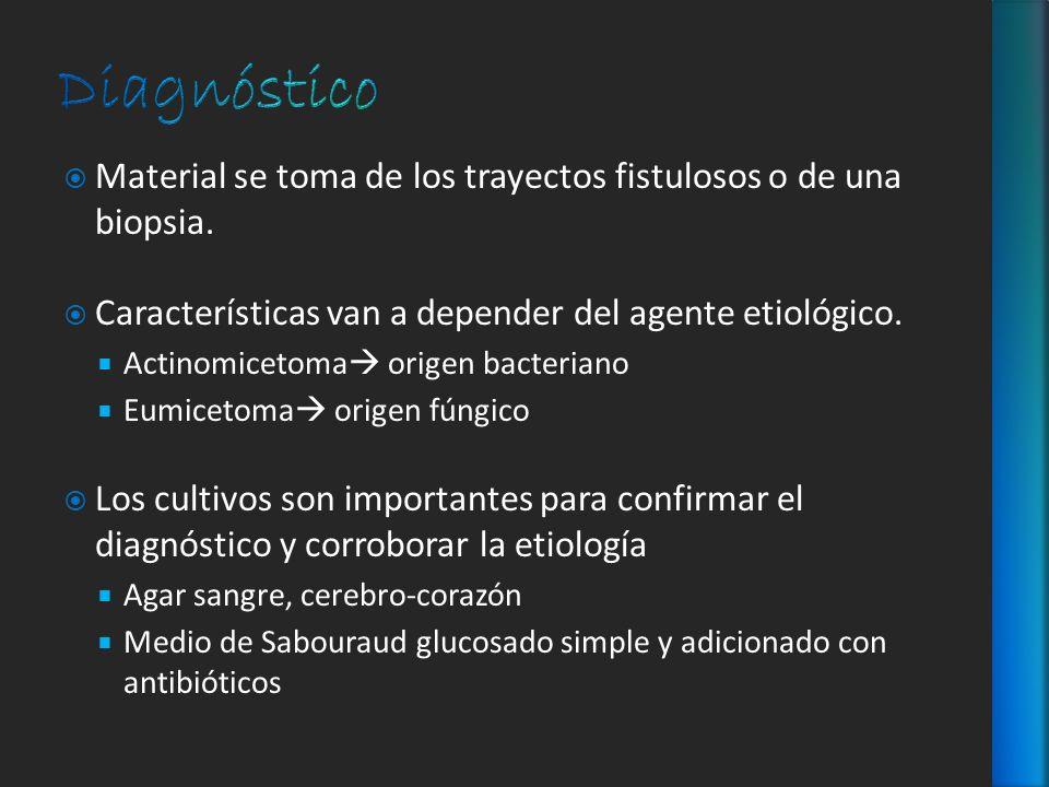 Material se toma de los trayectos fistulosos o de una biopsia. Características van a depender del agente etiológico. Actinomicetoma origen bacteriano