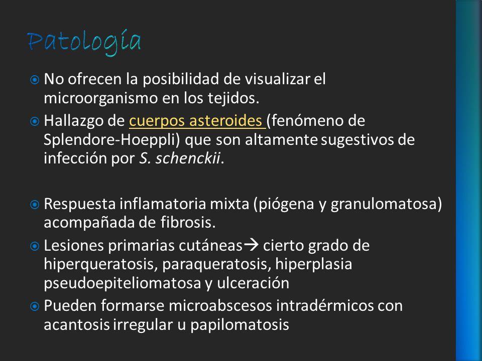 No ofrecen la posibilidad de visualizar el microorganismo en los tejidos. Hallazgo de cuerpos asteroides (fenómeno de Splendore-Hoeppli) que son altam