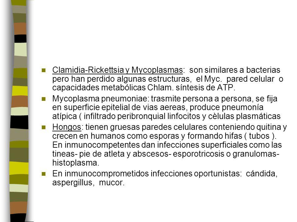 Clamidia-Rickettsia y Mycoplasmas: son similares a bacterias pero han perdido algunas estructuras, el Myc.