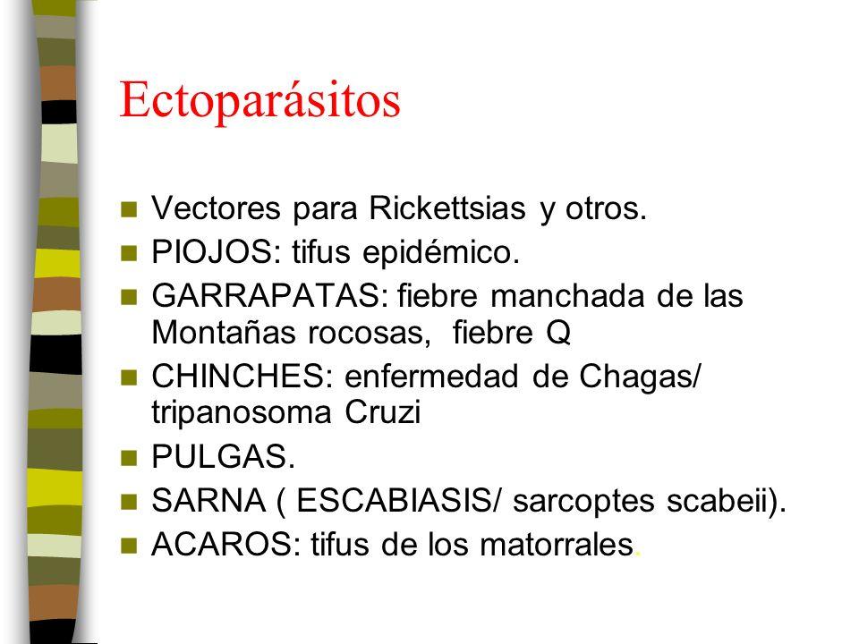 Ectoparásitos Vectores para Rickettsias y otros.PIOJOS: tifus epidémico.
