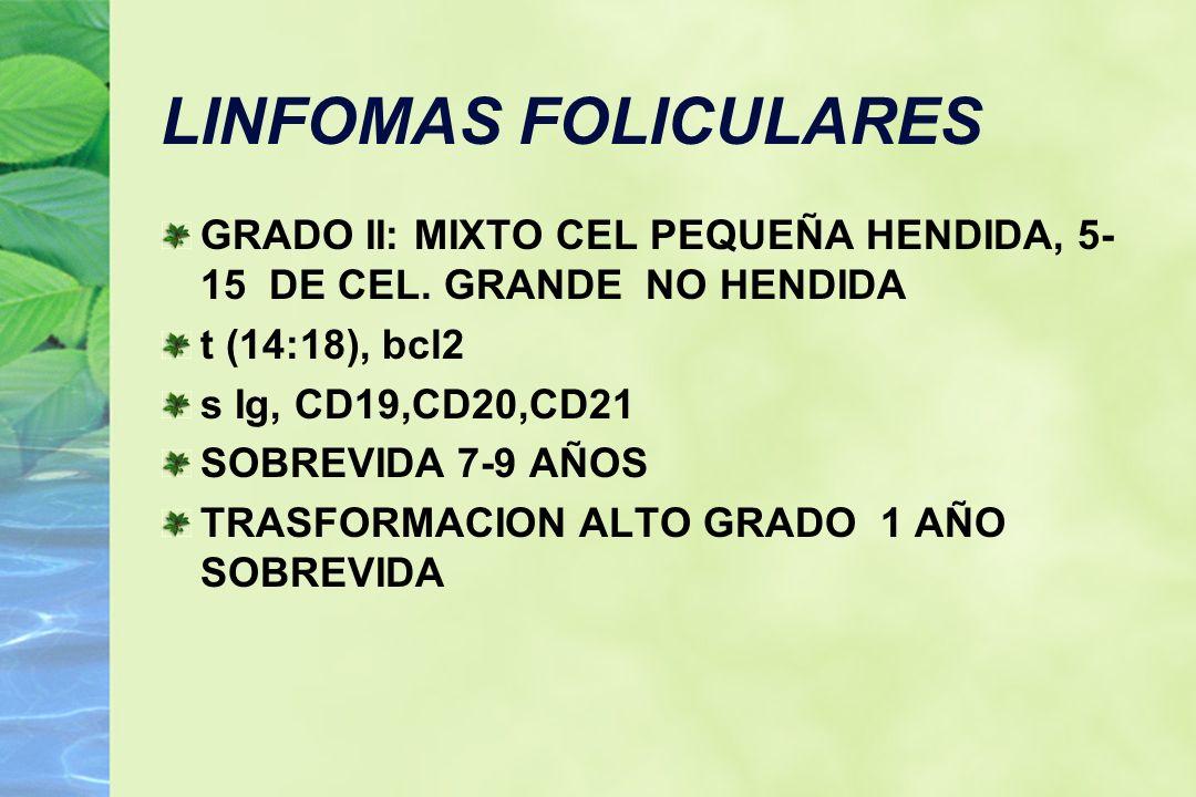 LINFOMAS FOLICULARES GRADO II: MIXTO CEL PEQUEÑA HENDIDA, 5- 15 DE CEL. GRANDE NO HENDIDA t (14:18), bcl2 s Ig, CD19,CD20,CD21 SOBREVIDA 7-9 AÑOS TRAS