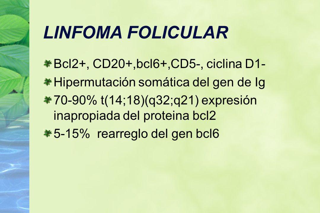 LINFOMA FOLICULAR Bcl2+, CD20+,bcl6+,CD5-, ciclina D1- Hipermutación somática del gen de Ig 70-90% t(14;18)(q32;q21) expresión inapropiada del protein